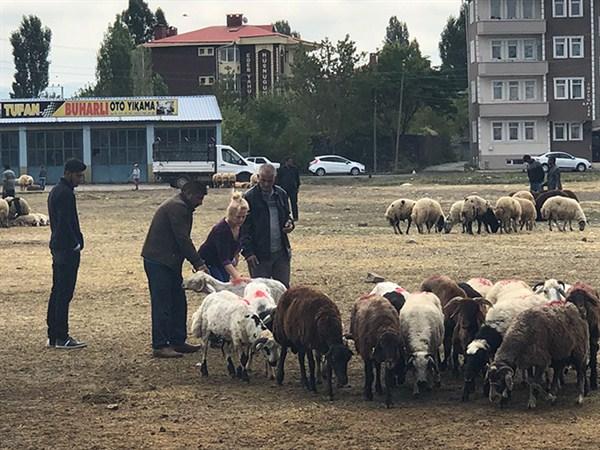 Kars'ta kurbanlıklar elde kaldı