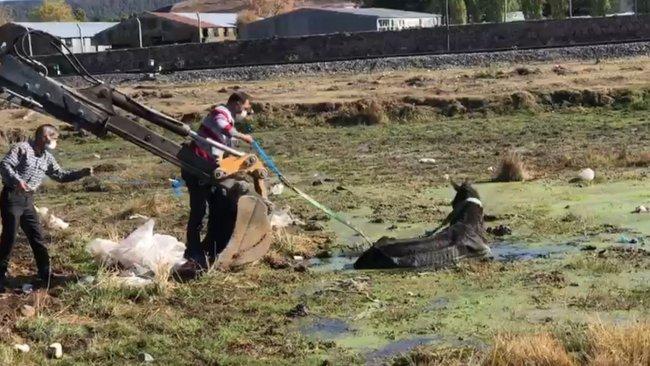Kars'ta bataklığa düşen at kurtarıldı