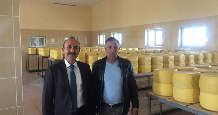 Kars'ta kaşar peyniri üretimi tam kapasite devam ediyor