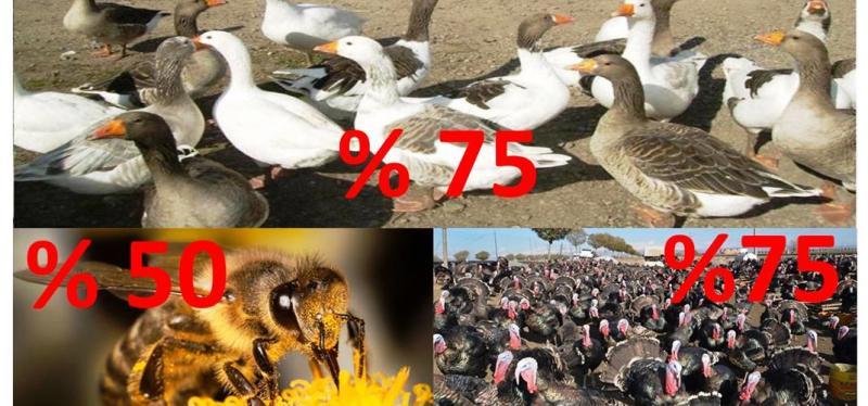 Arıcılık, ipek böcekçiliği, kaz ve hindi yetiştiriciliği desteklenecek