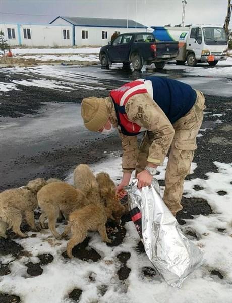 Jandarma, sokak hayvanlarını unutmadı