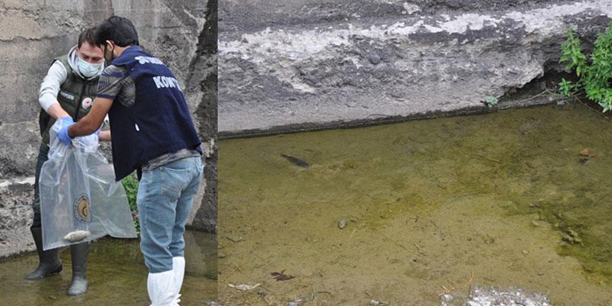 Kars'ta balık ölümlerinin sebebi belli oldu
