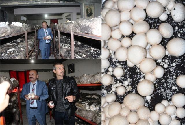 Iğdır'da mantar üretimi