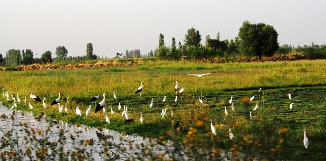 Dünyada 10 bin 660 kuş türü yaşıyor
