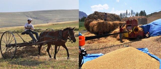 Ülke genelinde olduğu gibi, Kars'ta da tahıl üretimi azaldı