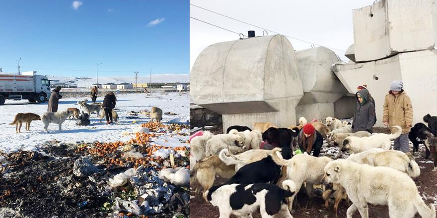 Kars Kafkas Üniversitesi (KAÜ) öğrencileri sokak hayvanlarına yardım çağrısı yaptı.