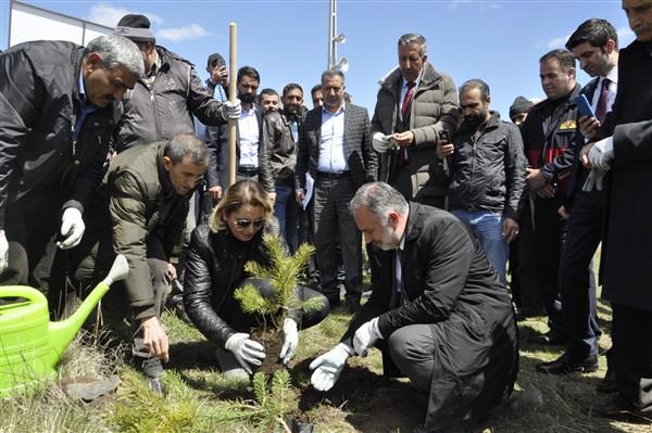 Kars Belediyesinin ağaçlandırma seferberliği devam ettiriyor