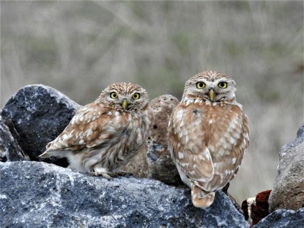 Türkiye'de en çok kuş Kars'ta sayıldı