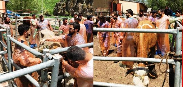 VHO'nun Bakanlık Onaylı Suni Tohumlama Kursu Başladı