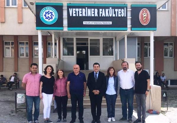 Ardahan'daki Sokak köpekleri kısırlaştırılacak