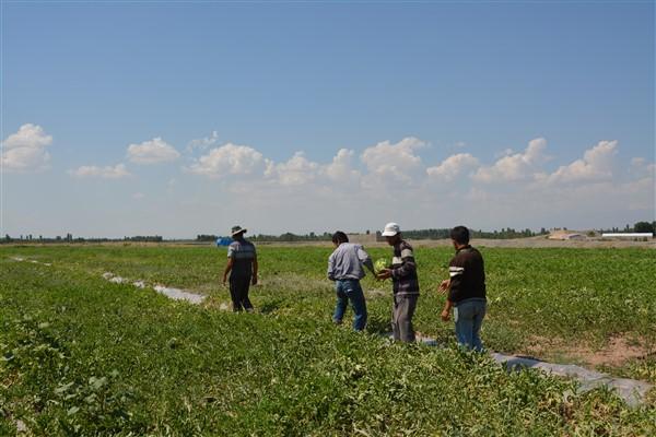 Örnek çiftçi Alican Akçan'ın organik karpuzları 20 gün önceden piyasaya çıktı