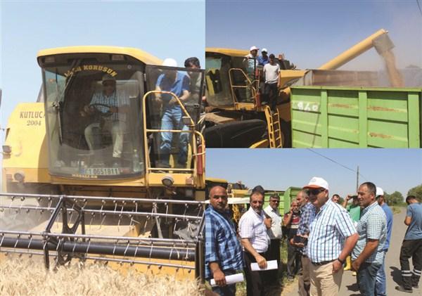 Doğunun Çukurovası Iğdır'da buğday hasadı başladı