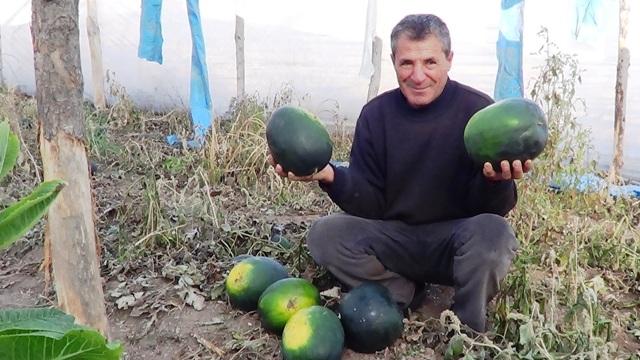 Örnek çiftçi sonbaharda karpuzu yetiştirdi