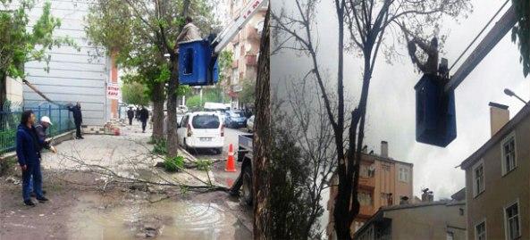 Kars Belediyesi ağaçların bakım ve budama çalışmalarına başladı