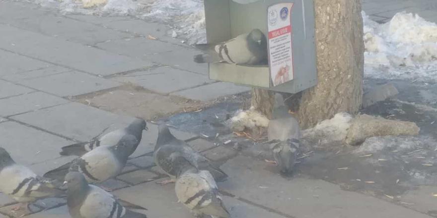 Sokak hayvanlarının yiyecek arayışı!