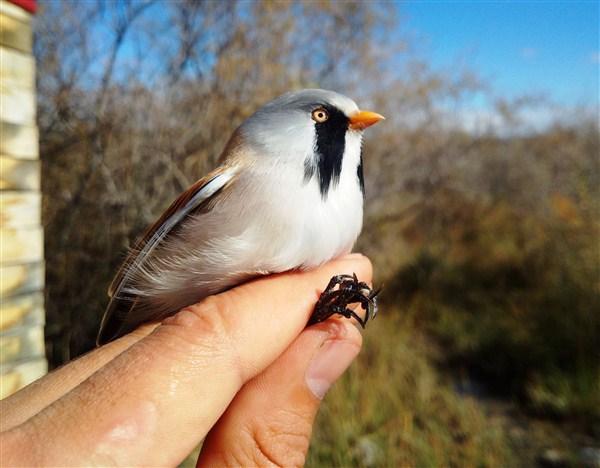 110 günde 103 farklı türden, 4 bin 444 kuş halkalandı
