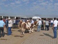 Karshayvan pazarı 4 gün kapatıldı!