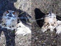 Sarıkamış'ta tel örgüye şıkışan puhu kurtarıldı