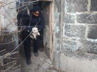 Kars'ta ki metruk binalar sokak hayvanları için tehlike oluşturuyor