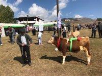 Selim'de  53 köyden 53 buzağı yarıştı