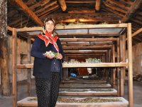 Boğatepe'de şifalı bitkiler bitki müzesinde kurutuluyor
