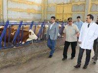 Vali Türker Öksüz, besi çiftliğini ziyaret etti