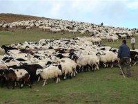 Çobanlığın cazibeli bir meslek haline getirilmesi hedefleniyor