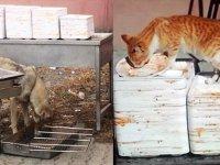 KAÜ'de kedi, köpek ve öğrenciler aynı tabaktan yemek yiyor