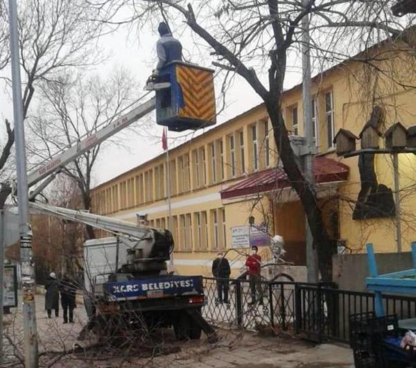 kars-belediyesi-asirlik-agaclari-buduyor-(2).jpg