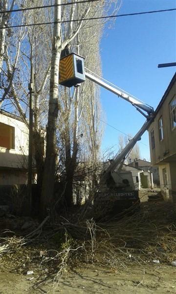 kars-belediyesi-asirlik-agaclari-buduyor-(3).jpg