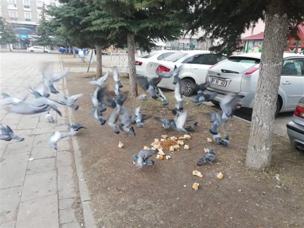 kars-belediyesi-sokak-hayvanlarini-ac-birakmiyor-(5).jpg