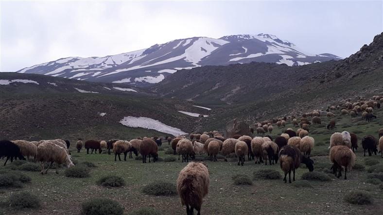 karsli-dagcilar-suphan-dagina-zirve-yapti-(1).jpg